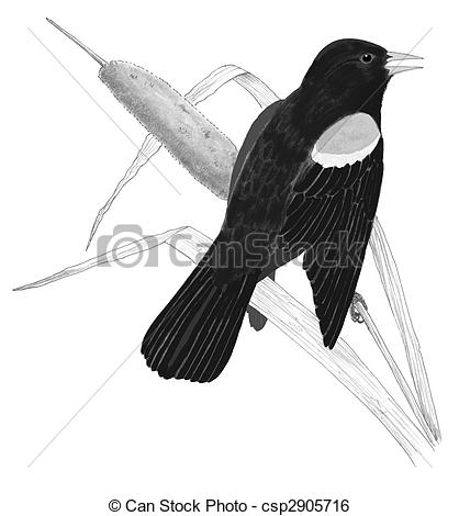 Red-winged Blackbird clipart #15, Download drawings