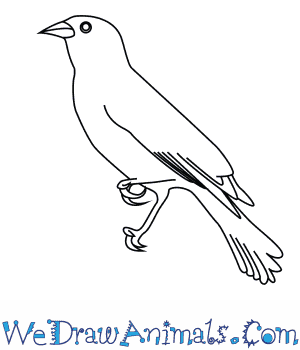 red winged blackbird coloring pages - photo#19