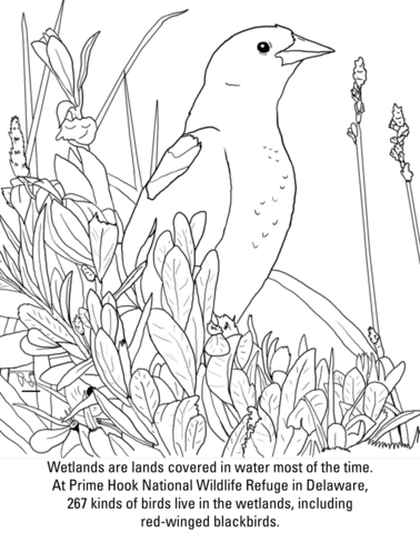 Red-winged Blackbird coloring #9, Download drawings