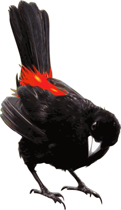 Red-winged Blackbird svg #3, Download drawings