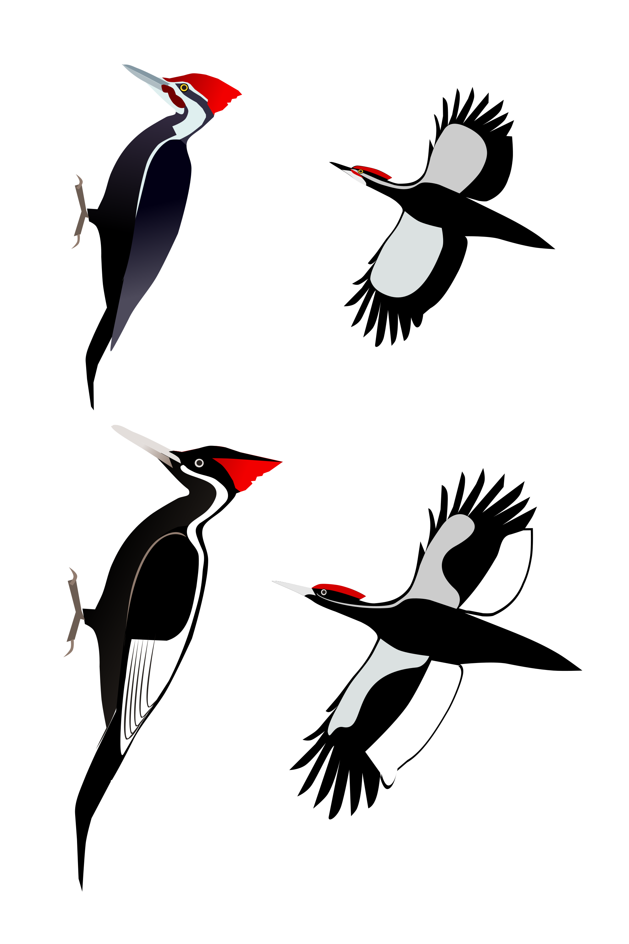 Red-winged Blackbird svg #16, Download drawings