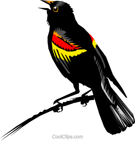 Red-winged Blackbird svg #18, Download drawings
