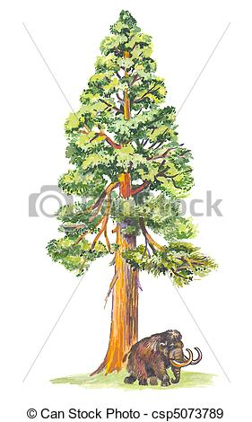 Redwood clipart #19, Download drawings