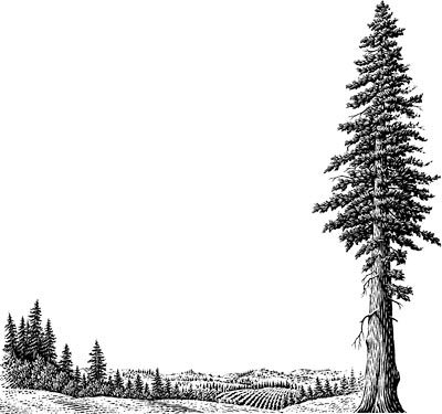 Redwood clipart #3, Download drawings