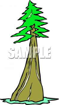 Redwood clipart #6, Download drawings