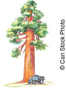 Redwood clipart #11, Download drawings