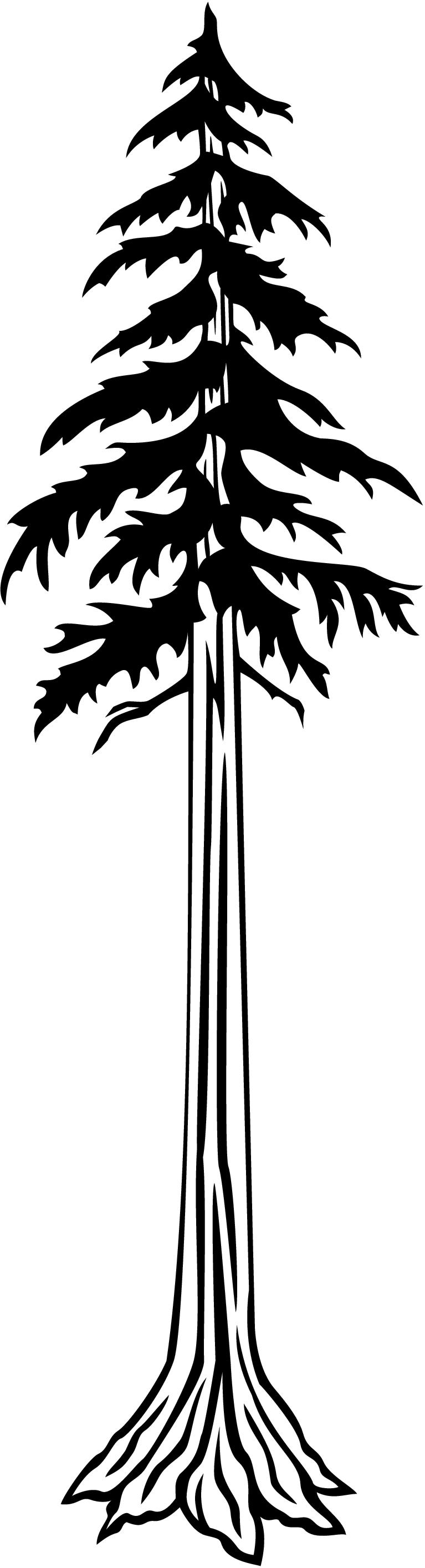 Redwood clipart #17, Download drawings