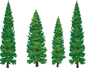 Redwood clipart #1, Download drawings