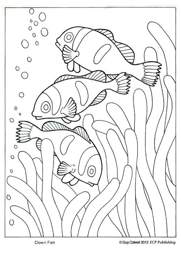Clownfish coloring #12, Download drawings