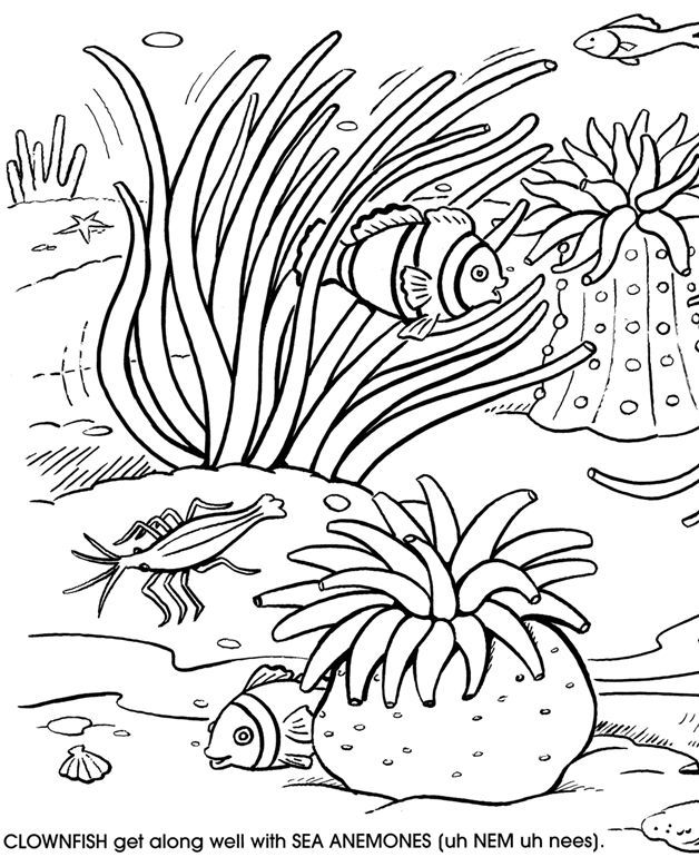 Great Barrier Reef coloring #10, Download drawings