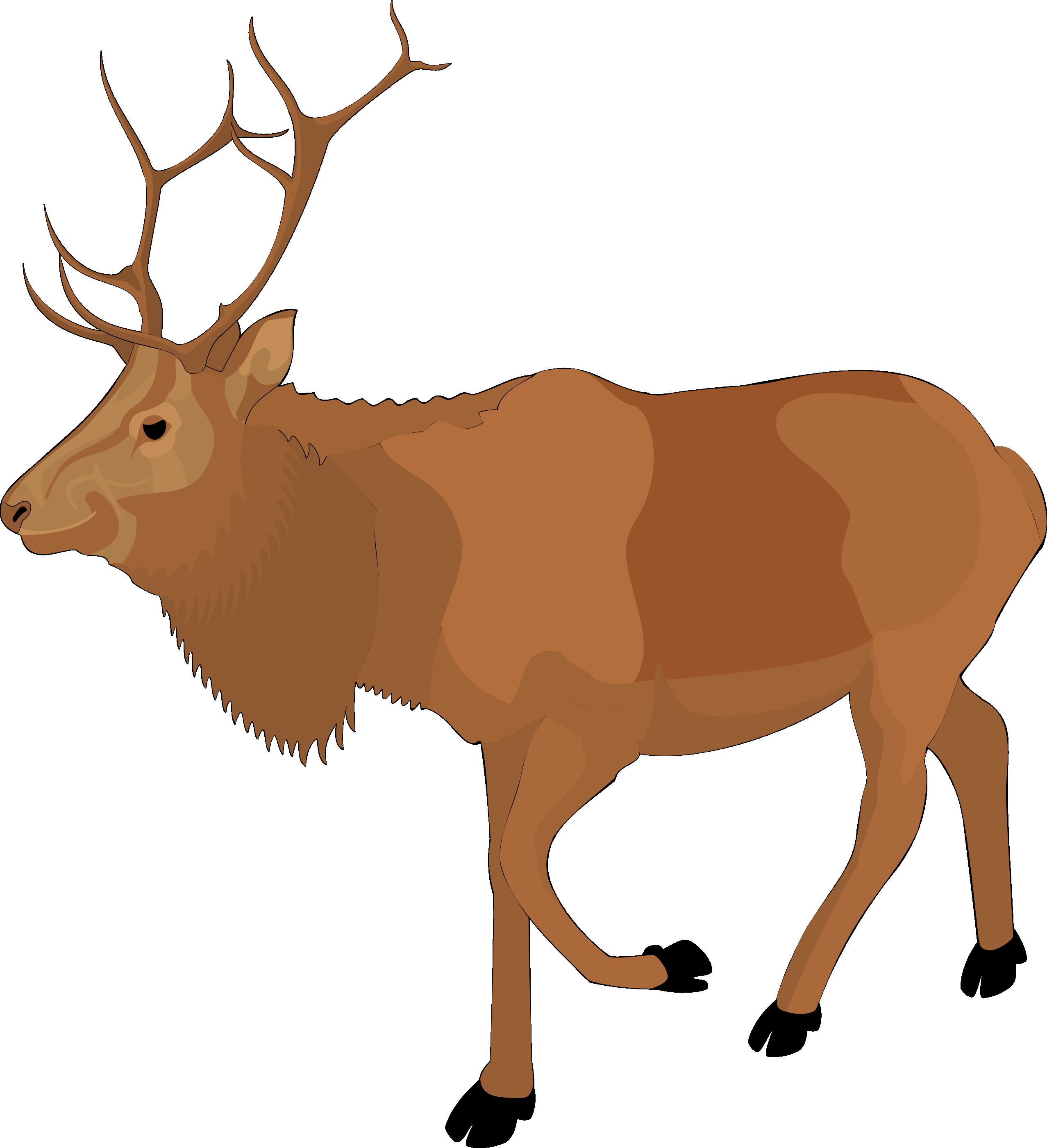 Reindeer clipart #1, Download drawings