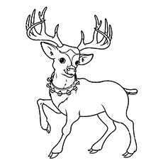 Reindeer coloring #20, Download drawings