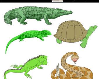 Reptile clipart #12, Download drawings