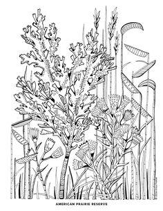 Reserve coloring #4, Download drawings