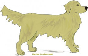 Retriever clipart #9, Download drawings