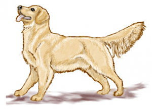 Retriever clipart #14, Download drawings