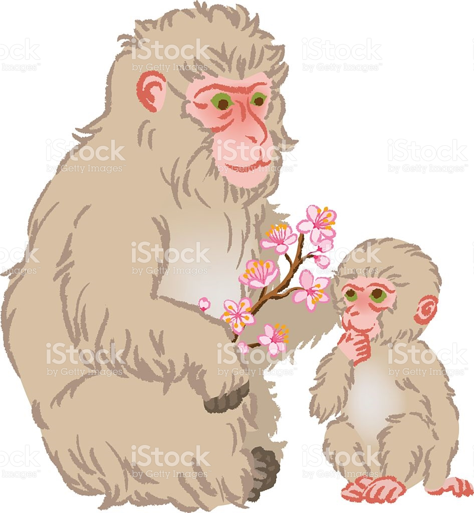 Rhesus Macaque clipart #6, Download drawings
