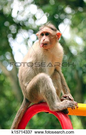 Rhesus Macaque clipart #15, Download drawings