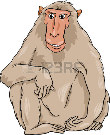 Rhesus Macaque clipart #19, Download drawings