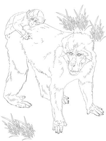 Rhesus Macaque coloring #12, Download drawings