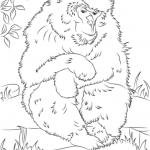 Rhesus Macaque coloring #8, Download drawings