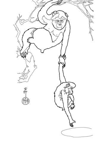 Rhesus Macaque coloring #9, Download drawings