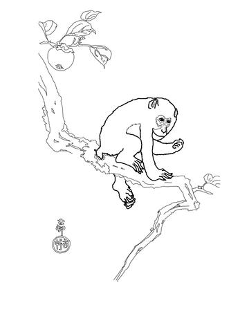Rhesus Macaque coloring #15, Download drawings