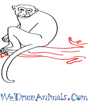 Rhesus Macaque coloring #20, Download drawings