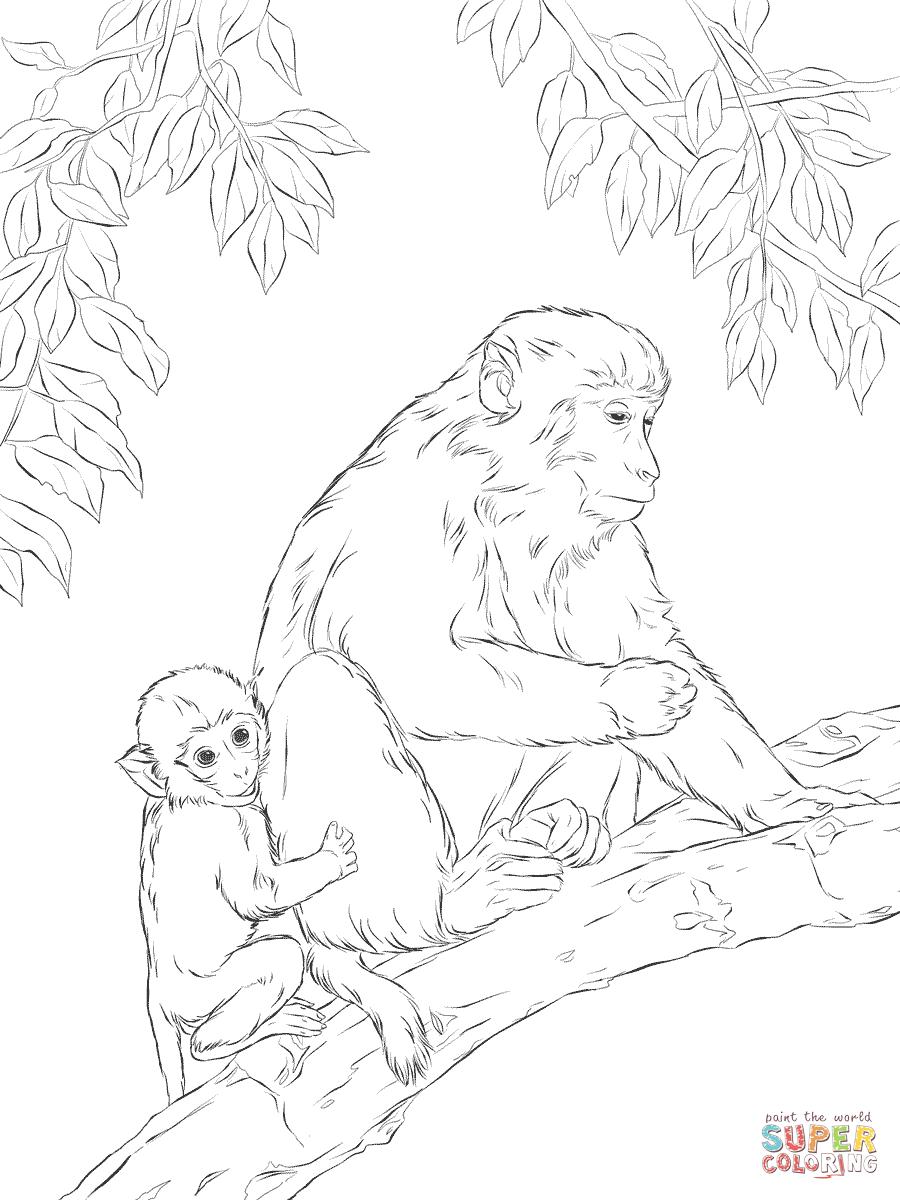 Rhesus Macaque coloring #18, Download drawings