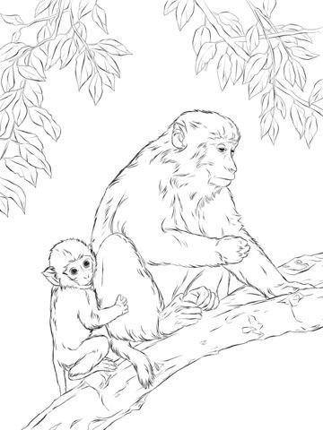 Rhesus Macaque coloring #7, Download drawings