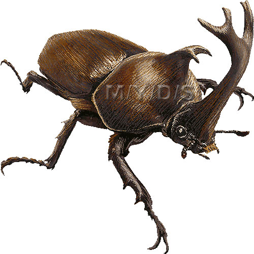 Rhinoceros Beetle clipart #5, Download drawings