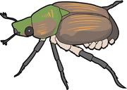 Rhinoceros Beetle clipart #8, Download drawings