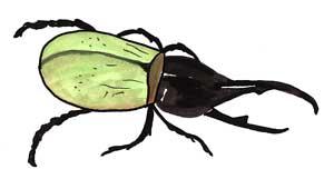 Rhinoceros Beetle clipart #11, Download drawings
