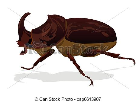 Rhinoceros Beetle clipart #17, Download drawings