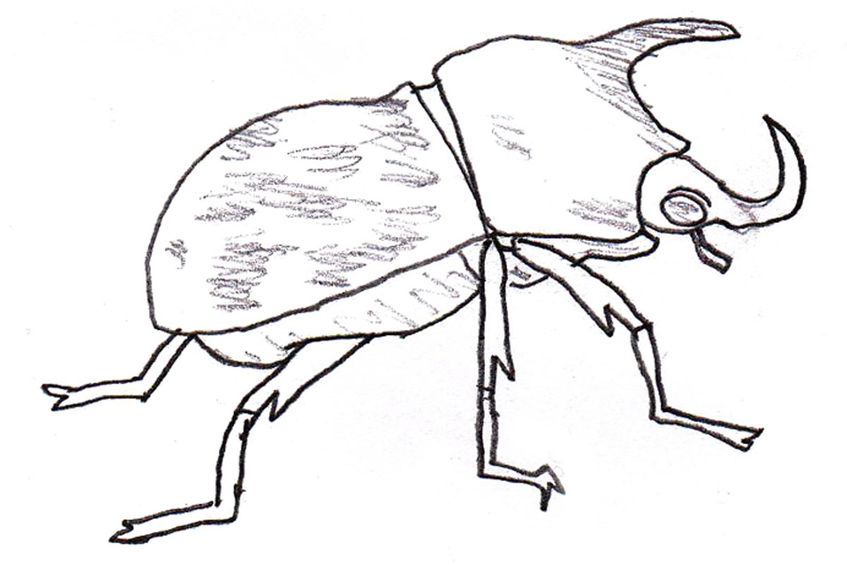 rhinoceros beetle coloring pages - photo#4