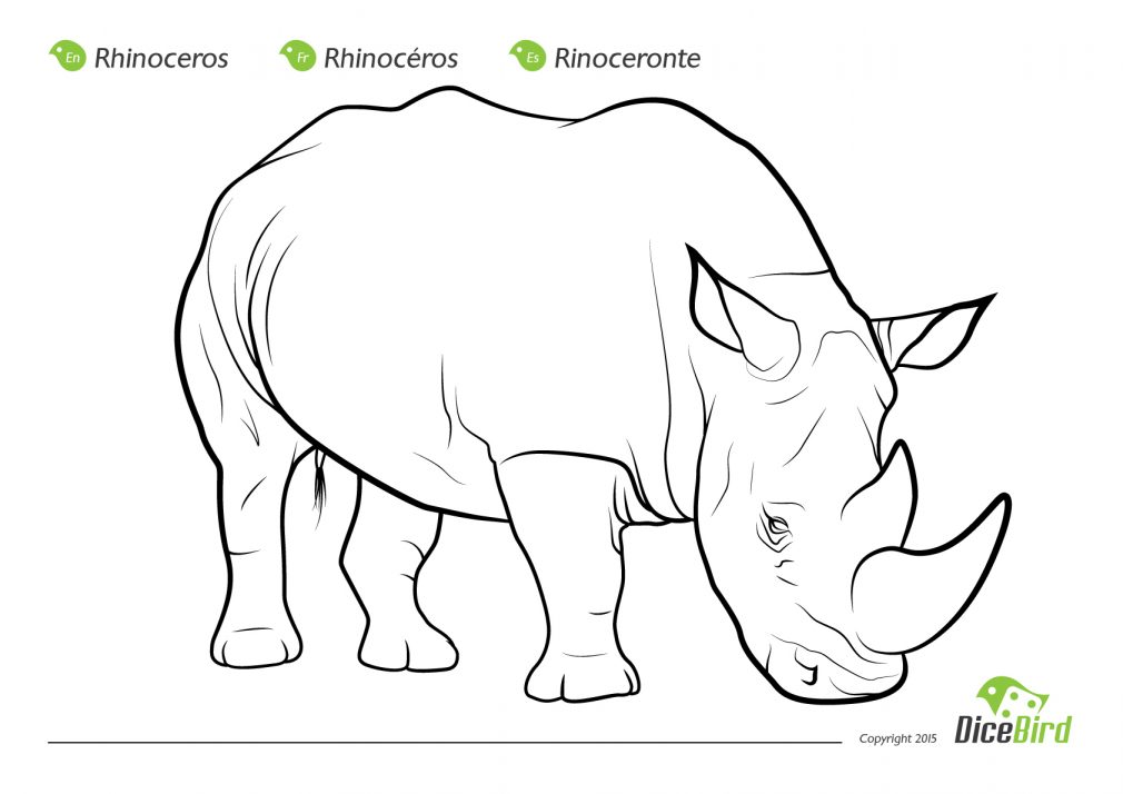 rhinoceros beetle coloring pages - photo#9