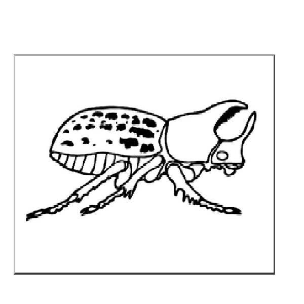 Rhinoceros Beetle coloring #11, Download drawings