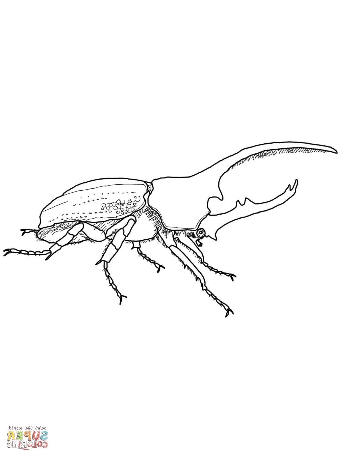 Rhinoceros Beetle Coloring Download Rhinoceros Beetle