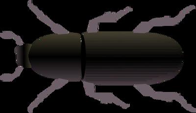 Rhinoceros Beetle svg #13, Download drawings