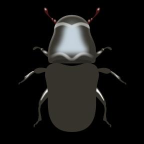 Rhinoceros Beetle svg #7, Download drawings