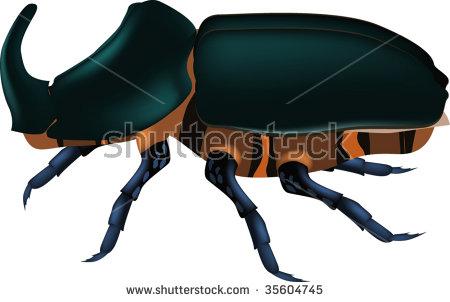 Rhinoceros Beetle svg #18, Download drawings