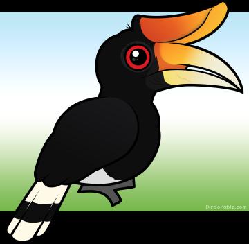 Rhinoceros Hornbill clipart #16, Download drawings