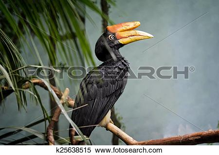 Rhinoceros Hornbill clipart #15, Download drawings