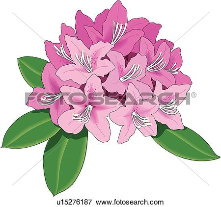Rhododendron clipart #18, Download drawings