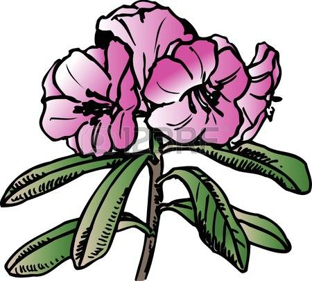 Rhododendron clipart #11, Download drawings