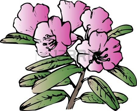 Rhododendron clipart #6, Download drawings