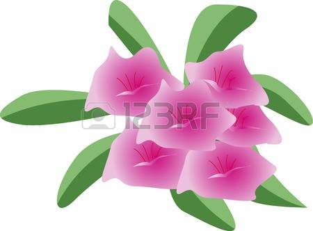 Rhododendron clipart #9, Download drawings