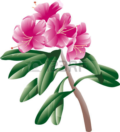 Rhododendron clipart #17, Download drawings