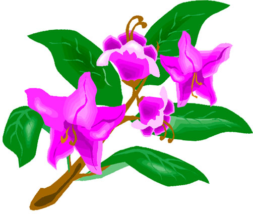 Rhododendron clipart #3, Download drawings