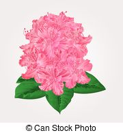 Rhododendron clipart #10, Download drawings